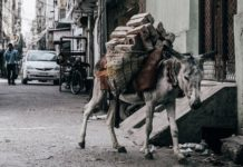 donkey carrying bricks