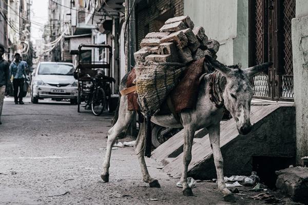 donkey carrying bricks